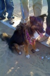LGBT Gay Pride March Chennai 2009 Lesbian Queer Bisexual Transgendered Transexual Transvestite Dog Bitch Beads Frills